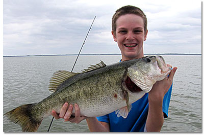 Harris Chain Largemouth Bass